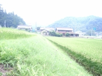 田舎.JPG
